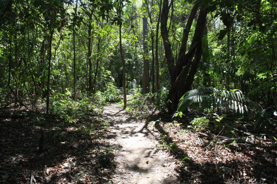 Wherever you need to go, a jungle path will take you there.