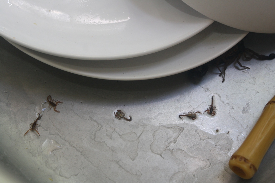 This family was in my friend´s sink.