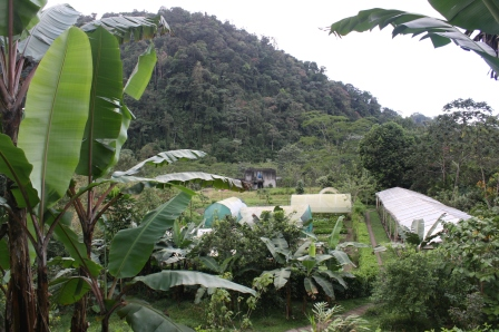 garden above