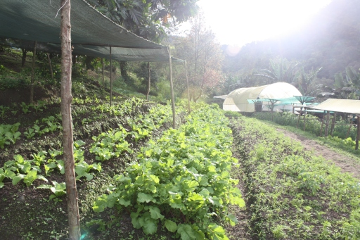 Part of the vegetable garden